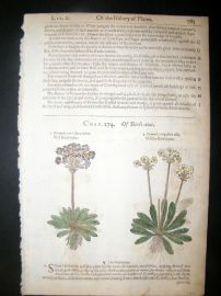 Gerards Herbal 1633 Hand Col Botanical Print. Mountain Cowslips